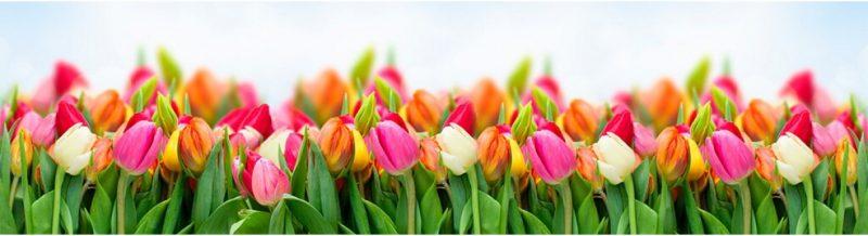 met tulpen haal je de lente in huis
