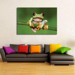 Muurdecoratie met foto op canvas van kikker