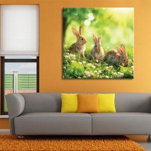Muurdecoratie met foto op canvas van konijnen