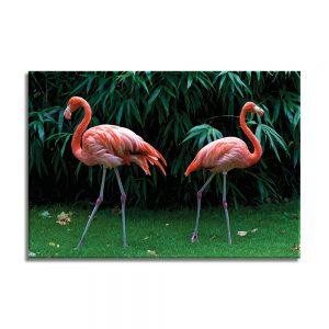 Flamingo op canvas foto