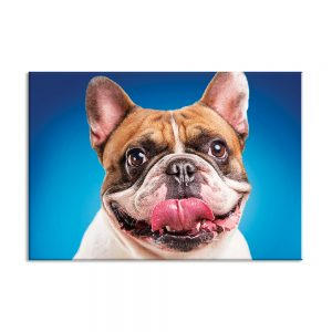 Canvas foto van hond