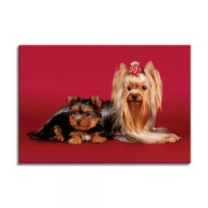 Canvas foto van 2 honden