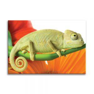 Canvas foto van iguana