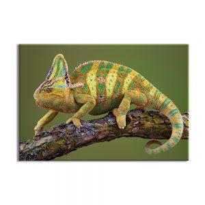 Canvas foto van reptiel iguana