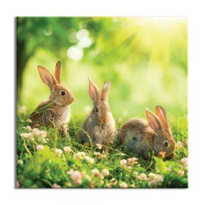 Foto op canvas van konijnen