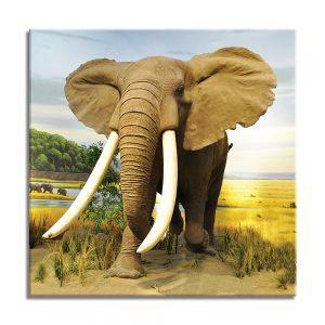 Olifant op canvas foto