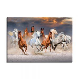 Canvas foto van paarden