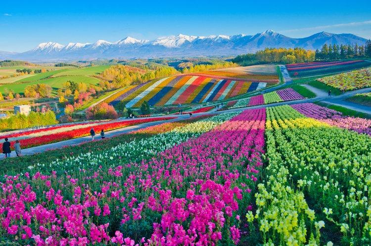 Kleurrijke foto - wij willen jou leven kleurrijk te maken